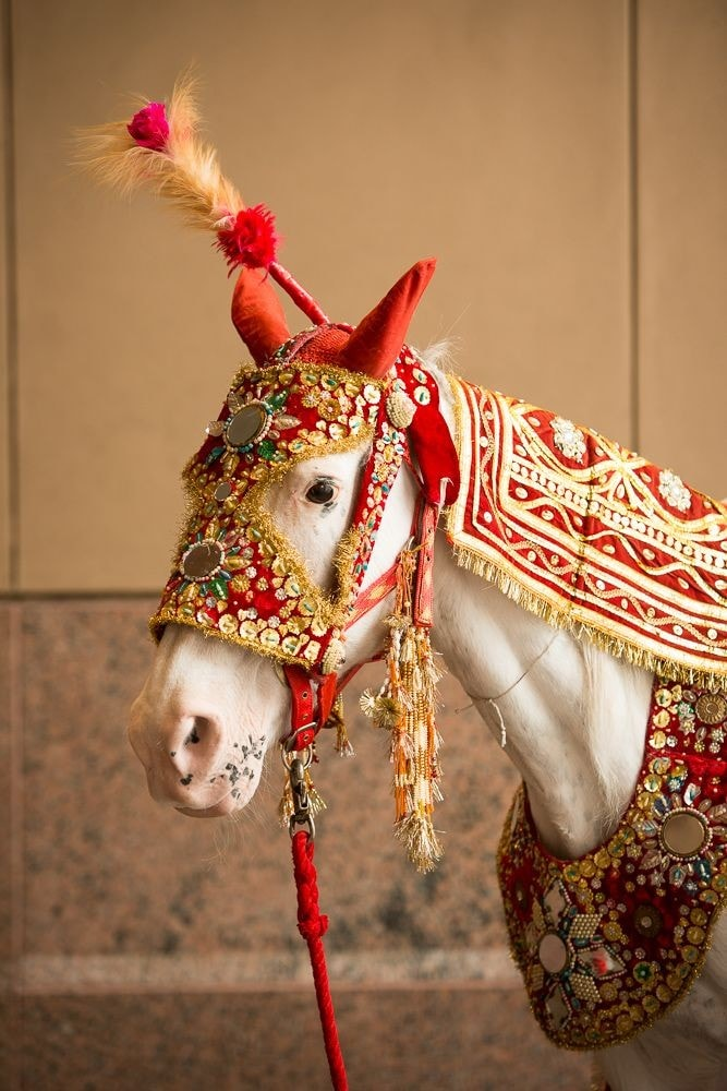 indian wedding horse rental